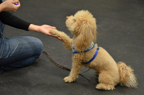 Teaching your dog a new trick is fun for your dog and can strengthen your bond.