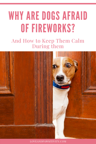How to Decrease Your Dog's Anxiety During Fireworks