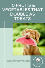 vegetables and fruits for dog treats