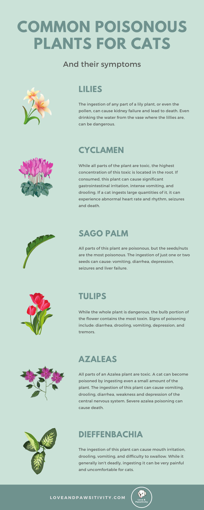 Most Common Poisonous Plants for Cats