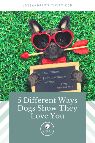 % Different Ways your Dogs Show They Love You