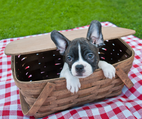 Picnic in the Park with your Dog