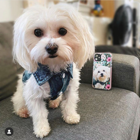 Dog Phone Cover
