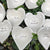 "Giving Hearts - ""Christmas Collection"" - Set of 10 - White"