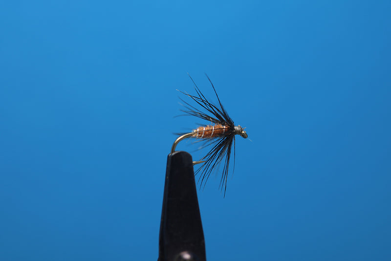Amber And Starling Soft Hackle