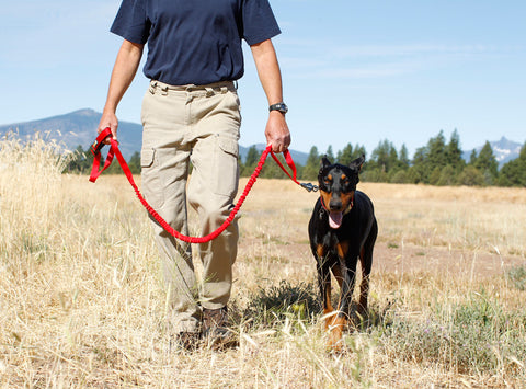 Ruffwear Roamer Leash - Hand-held, Waist-Worn, Extending Pet Leash