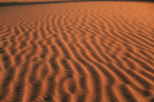 Print - Gardens in the Desert Sand