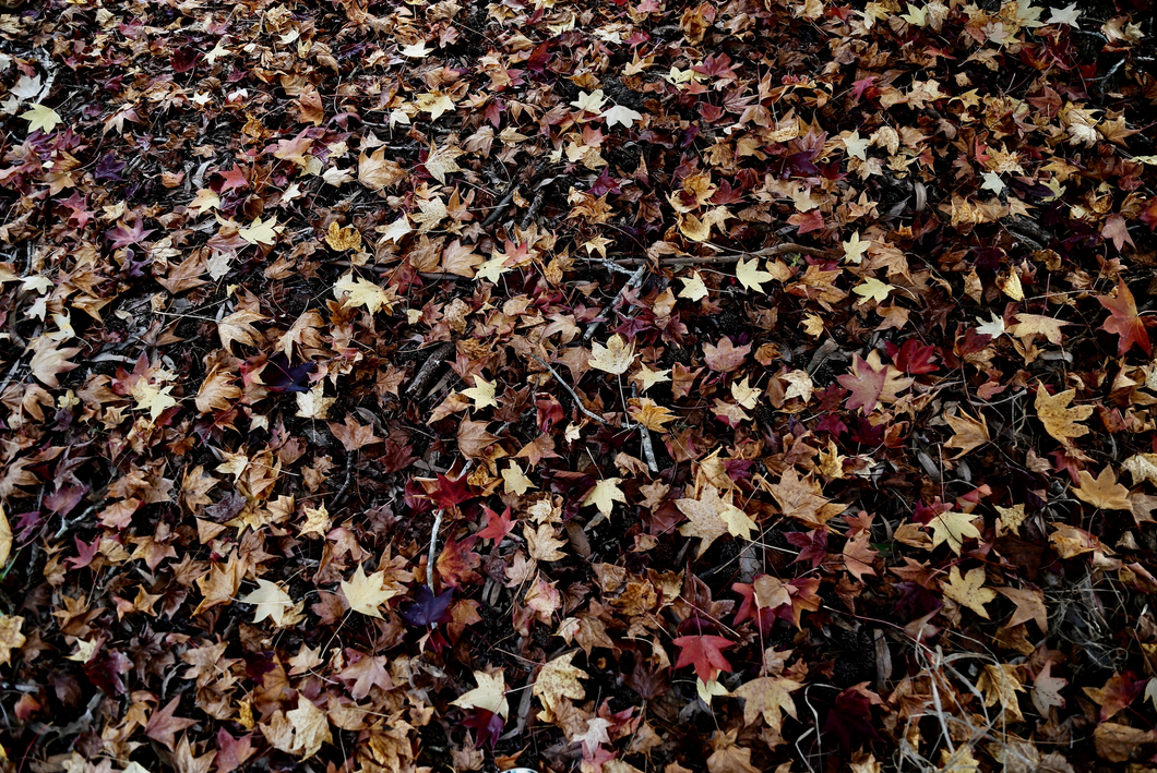 Print - Sweep the Fallen Leaves Away