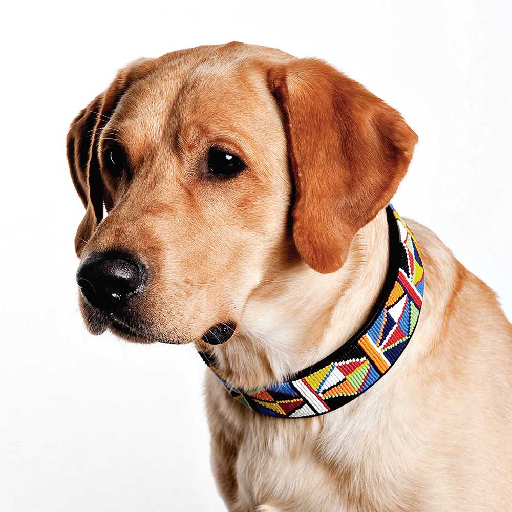 Primary Beaded Dog Collar on pup by The Kenyan Collection