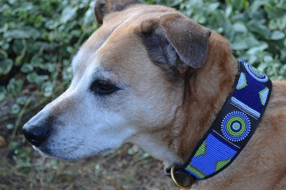 Passion Flower Beaded Dog Collar on pup by The Kenyan Collection