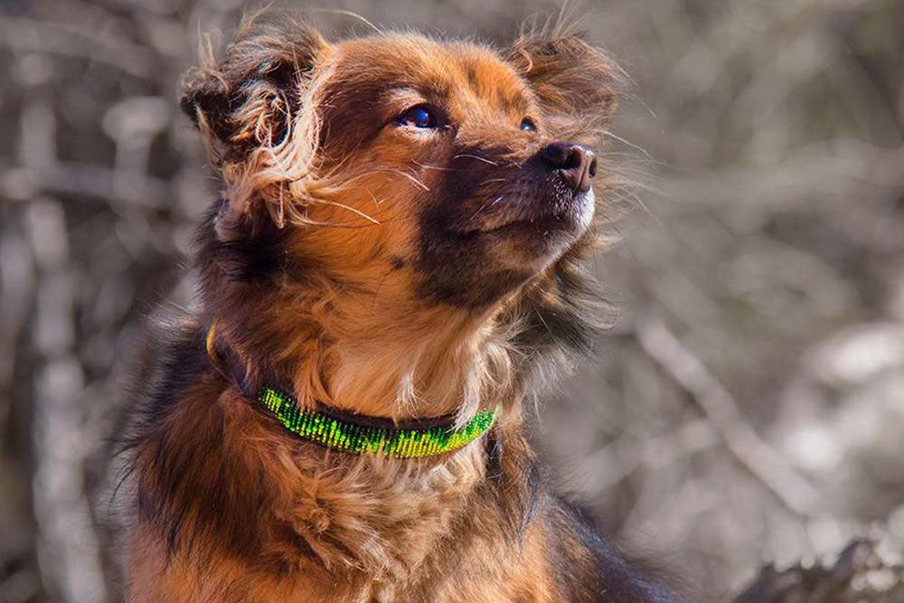 Rainforest Beaded Dog Collar on pup by The Kenyan Collection