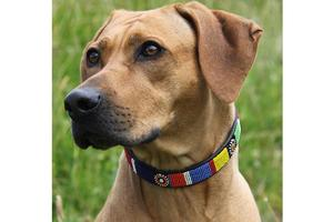 Circle of Life Beaded Dog Collar on pup by The Kenyan Collection