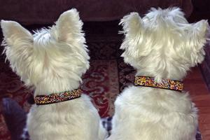 Confetti Classic Beaded Dog Collar on pup by The Kenyan Collection
