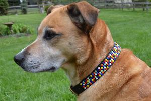 Confetti Modern Beaded Dog Collar by The Kenyan Collection