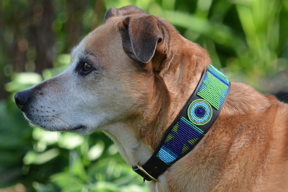 Peacock Beaded Dog Collar on pup by The Kenyan Collection