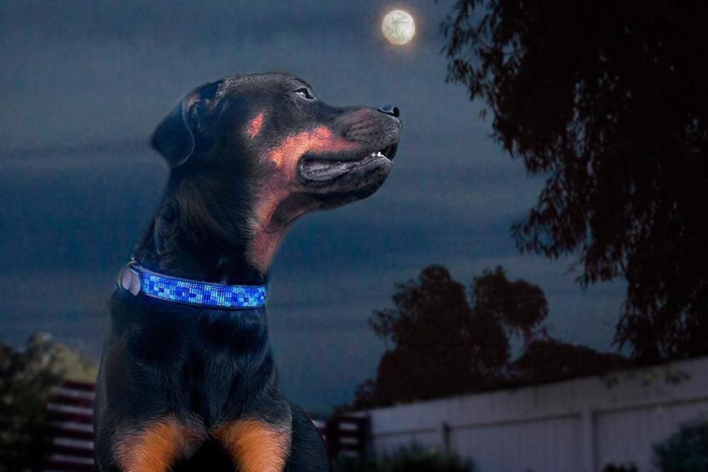 Moonbeam Beaded Dog Collar on pup by The Kenyan Collection