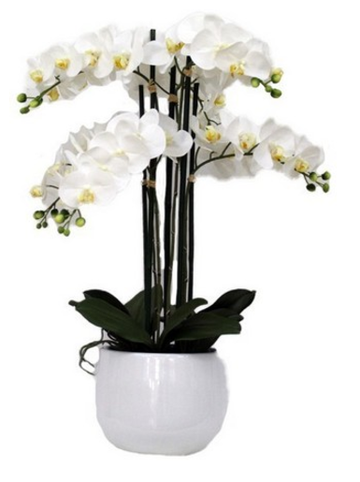 Real Touch Orchid 6 spray with white pot
