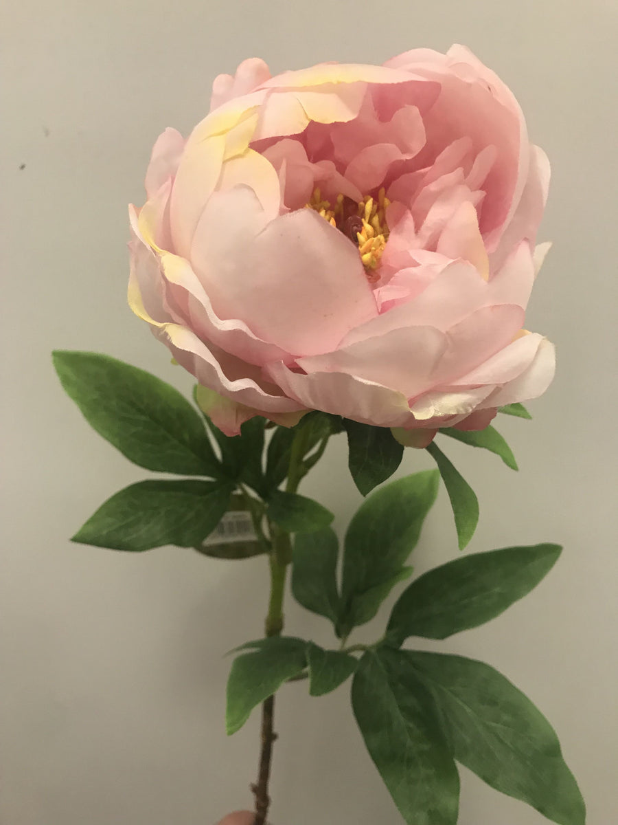 Angel Cupped Peony - Soft Pink