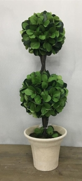 2 Ball Topiary In Paper Pot