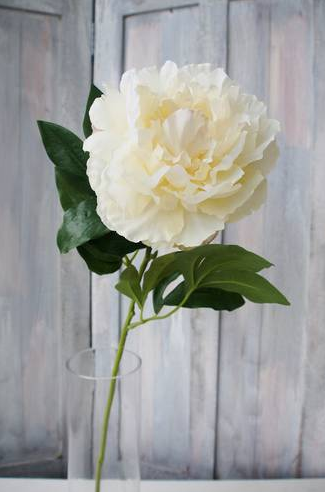 Duchess Peony Spray-Cream