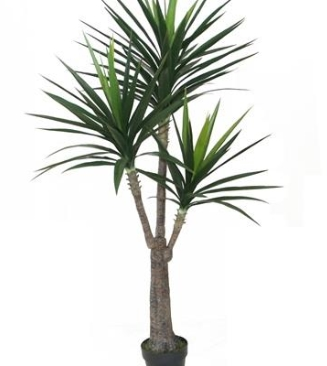 Yucca with Pot - Large