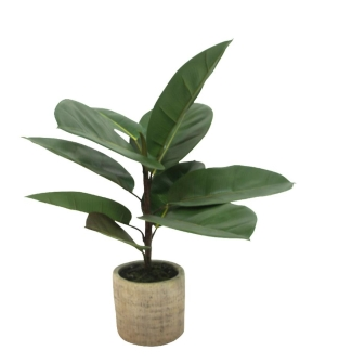 Rubber Tree with Terrazzo Pot