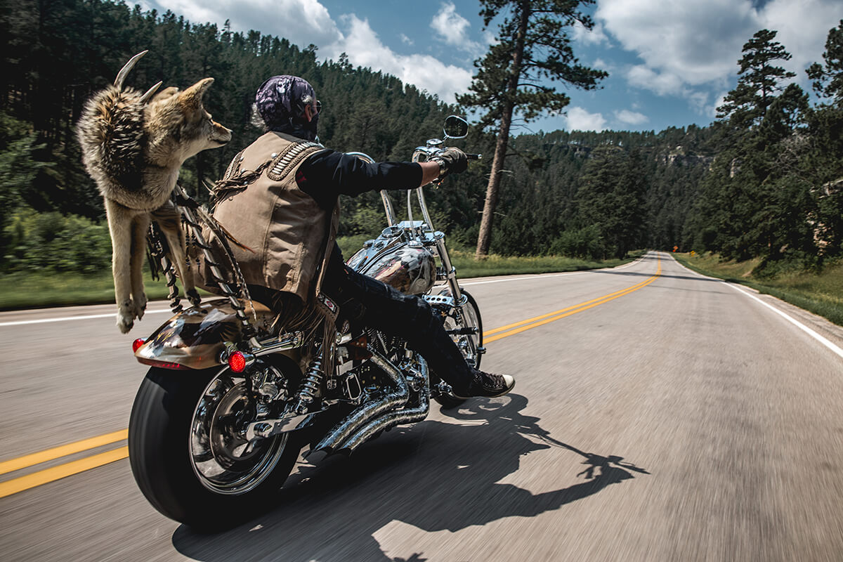Graeme and Gus the Coyote ripping the open roads of the Black Hills. Lowbrow Customs - Sturgis 2017