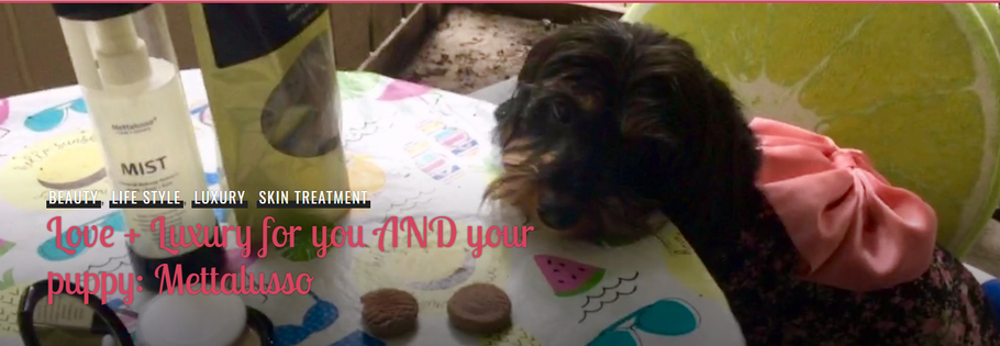 LOVE + LUXURY FOR YOU AND YOUR PUPPY: METTALUSSO