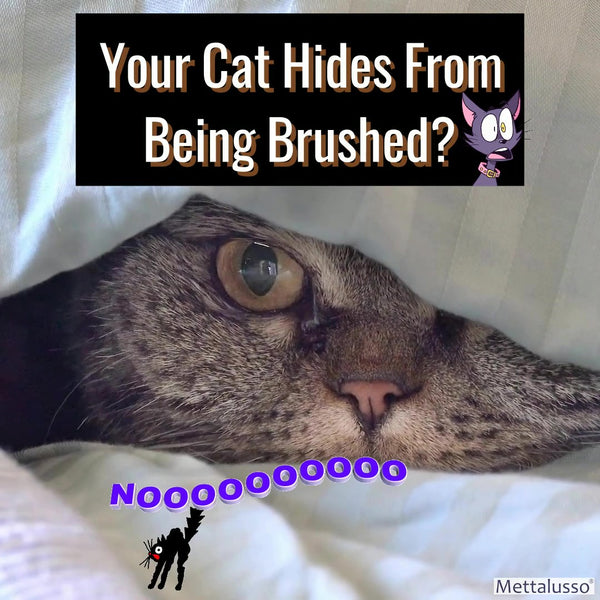 Your Cat Hides from Being Brushed?