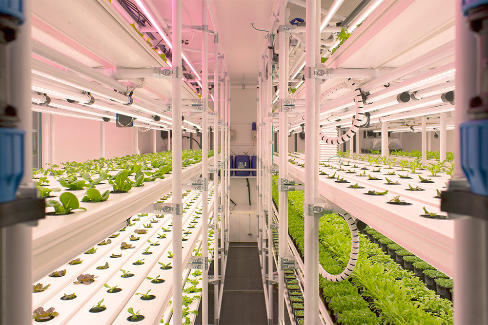 V-Farm Production Facility