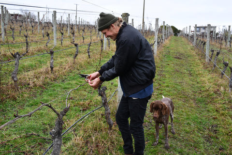 Unkel Wines pruning