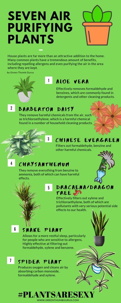 Seven air purifying plants