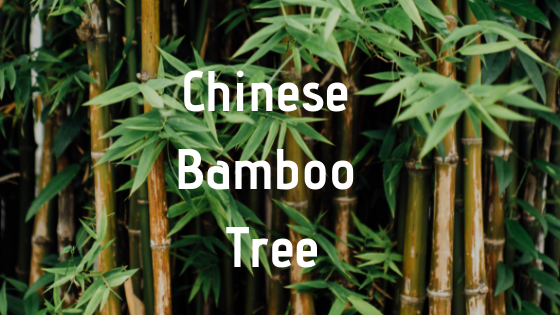 Motivational Monday - Grow Like The Bamboo Tree