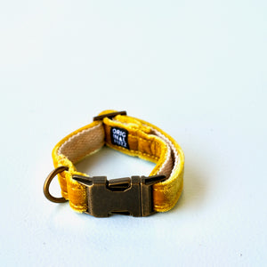 Small Velvet Dog Collar in Yellow