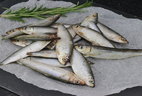 Fresh Frozen Sprats 8kg