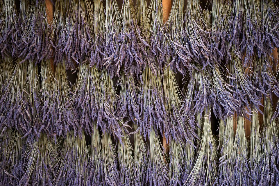 drying lavender wall