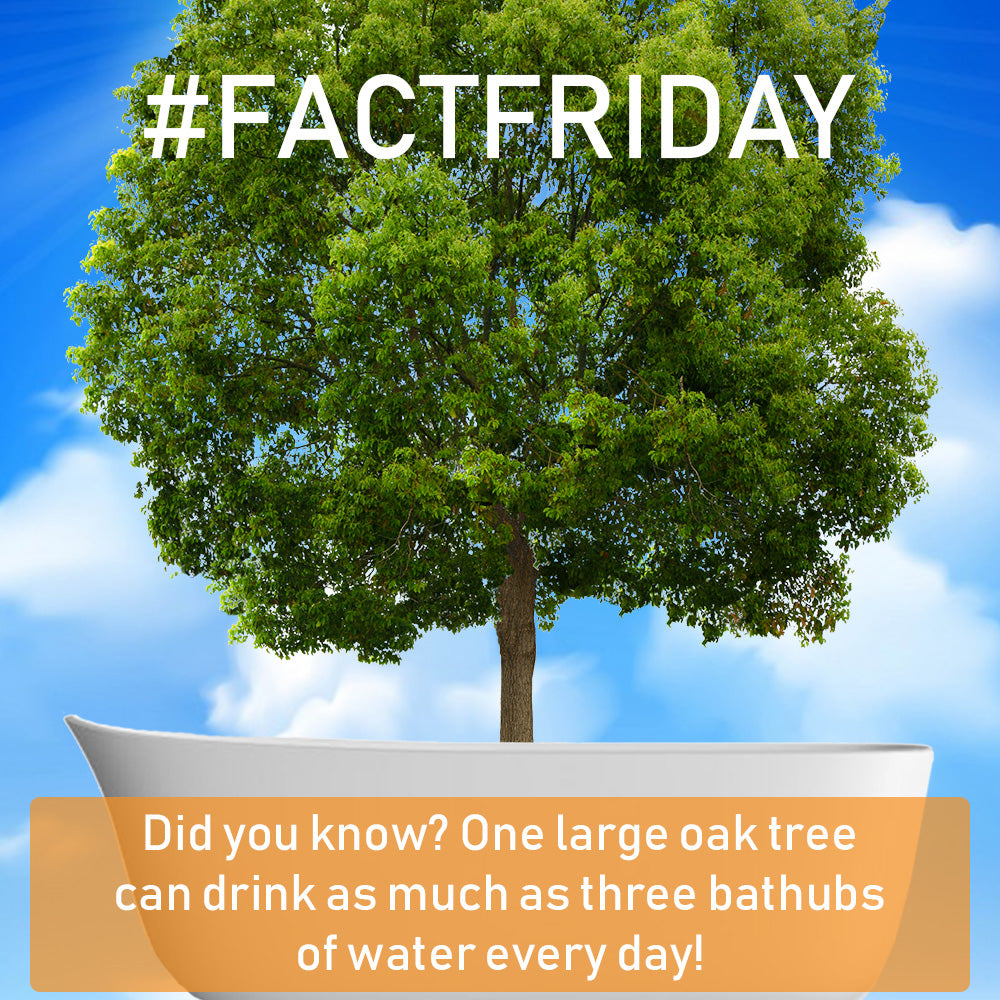 #FACTFRIDAY - One Tree. Three full bathtubs. No problem.