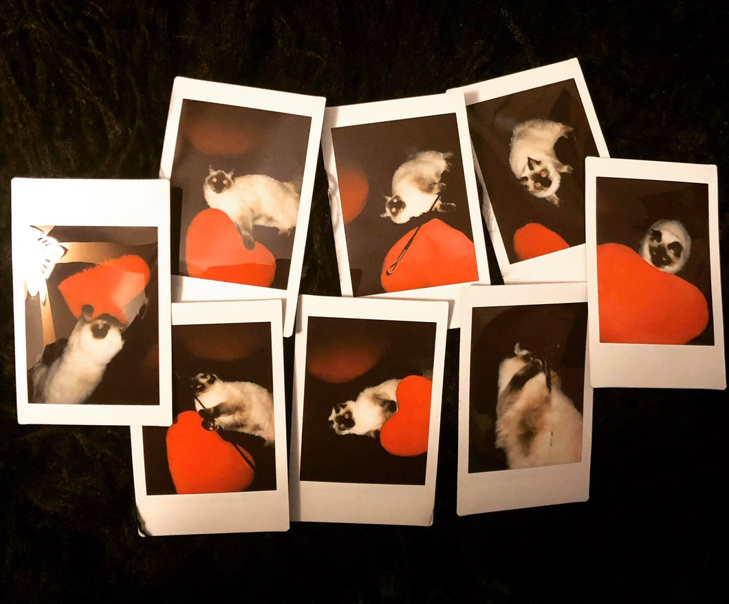Nugget Polaroid Set