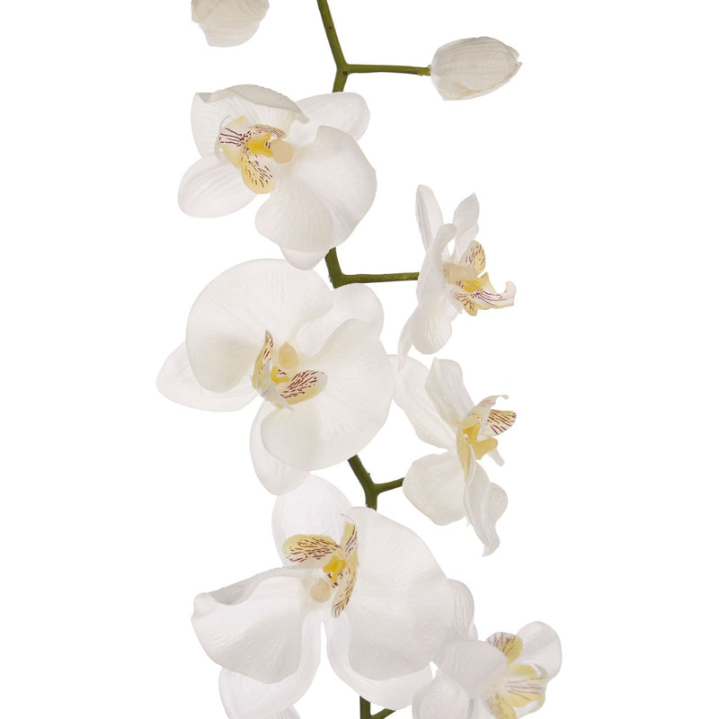 Cream Orchid Stem