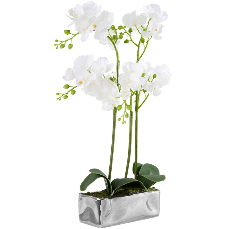 Silver Planter Orchid