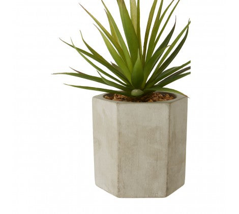Sword Grass in Grey Planter