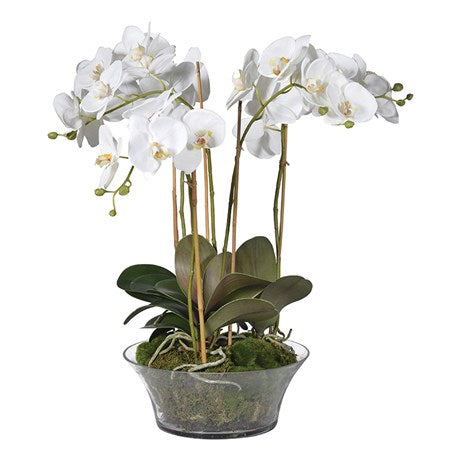 White Orchid in Shallow Glass Bowl