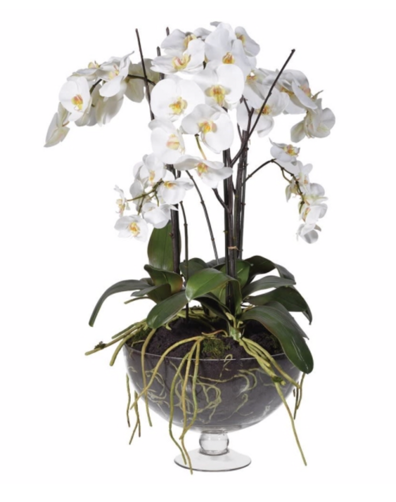 White Orchid in Footed Glass Bowl