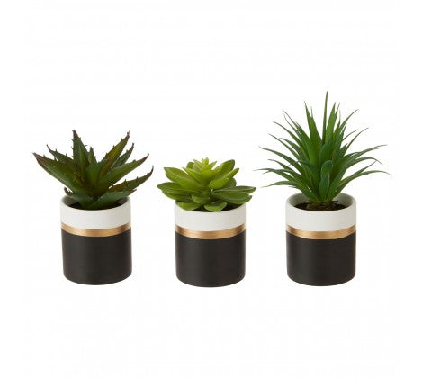 Black Potted Succulents
