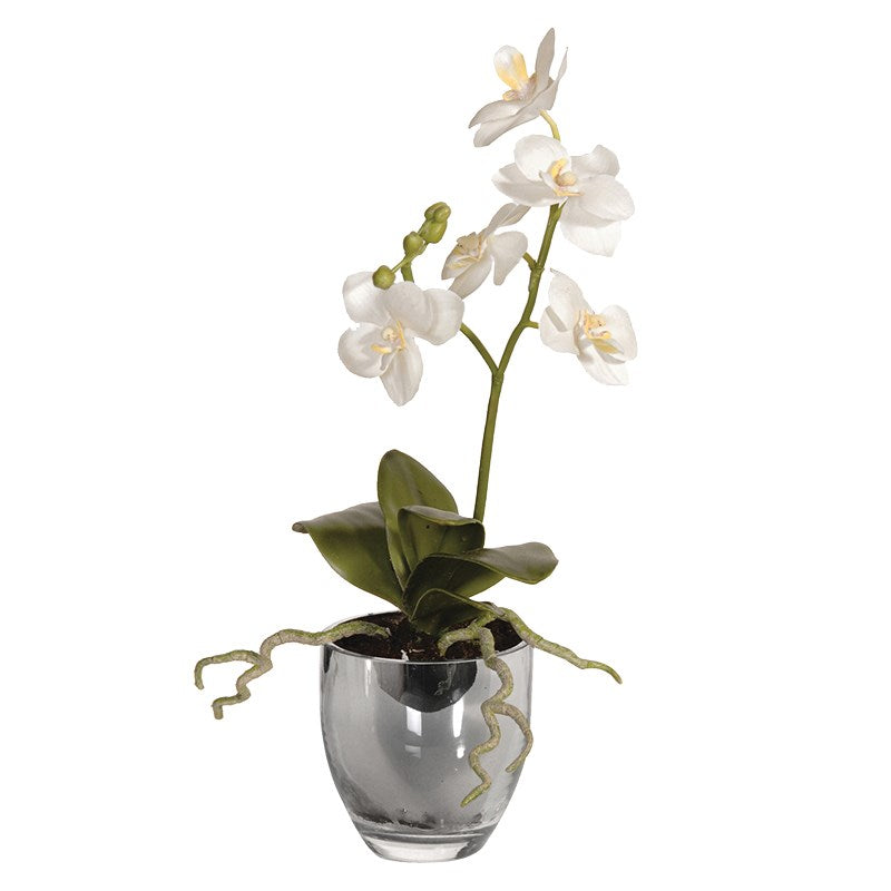 White Baby Orchid Phalaenopsis Plant In Metallic Glass Pot