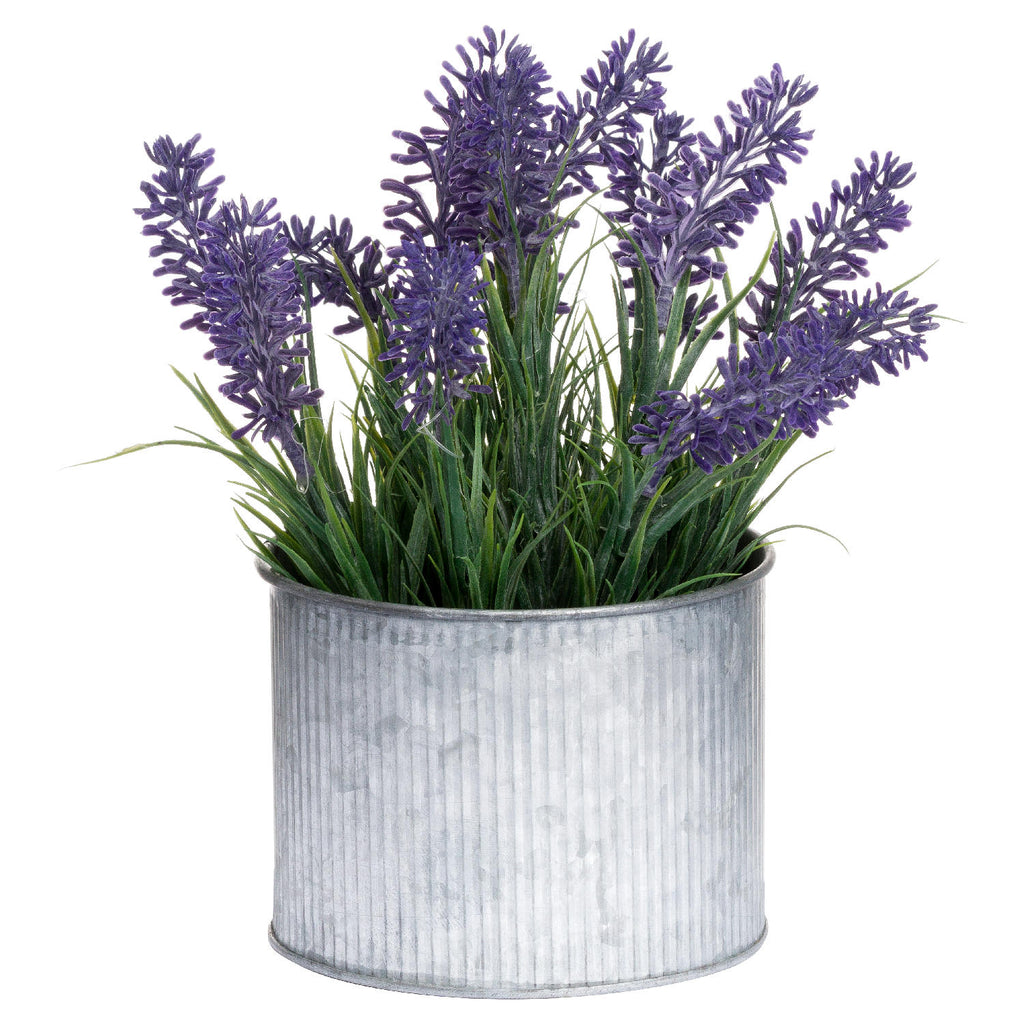 Lavender In Dolly Tin