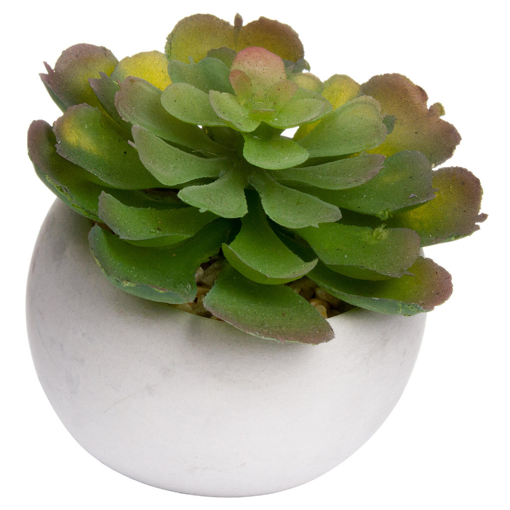 Miniature Succulent In Cement Pot