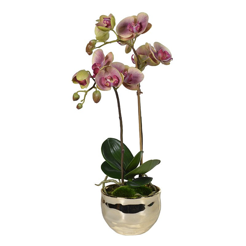 Pretty Phalaenopsis Plant In Gold Pot
