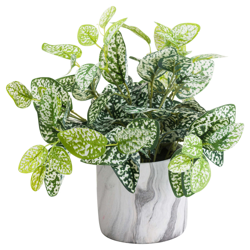 Nerve Plant In Marble Pot