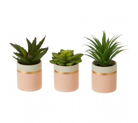 Pink Potted Succulents